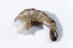 新鲜的大虾 免版税库存照片