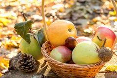 新鲜的季节性有机果子 免版税库存照片