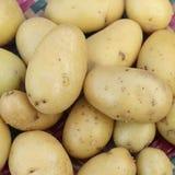 新鲜的小土豆特写镜头  库存图片