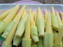 新鲜的小玉米为烹调做准备 免版税库存照片