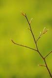 新鲜的小的小树枝 图库摄影
