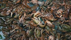 新鲜的小龙虾被卖在柜台的鱼市上 股票视频
