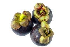新鲜的山竹果树果子 免版税库存照片
