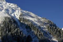 新鲜的山雪森林 免版税图库摄影