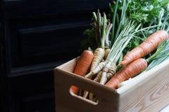 新鲜的庭院我的蔬菜 图库摄影
