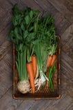 新鲜的庭院我的蔬菜 库存照片