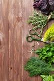 新鲜的庭院草本 免版税库存照片