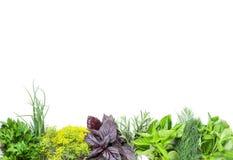 新鲜的庭院草本 免版税库存图片