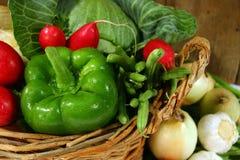 新鲜的庭院蔬菜 库存照片