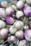 新鲜的庭院蔬菜 免版税库存照片