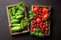 新鲜的庭院蕃茄和黄瓜 免版税库存照片