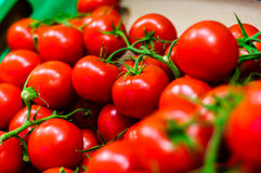 新鲜的庭院蕃茄 免版税库存图片
