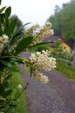 新鲜的开花在村庄在春天分支 免版税库存照片