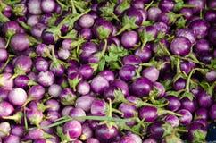 新鲜的微型茄子 库存图片