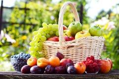 新鲜的成熟有机果子在庭院里 平衡饮食 免版税图库摄影
