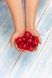 新鲜的成熟有机蕃茄在手中 图库摄影