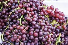 新鲜的成熟水多的红葡萄 库存照片