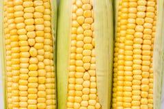 新鲜的成熟玉米 免版税库存照片