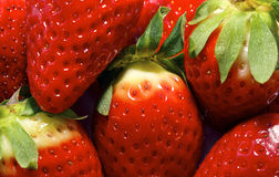 新鲜的成熟理想的草莓 免版税库存图片