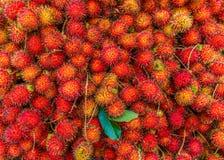 新鲜的成熟红毛丹普遍的水多的甜热带水果塞尔维 免版税库存图片