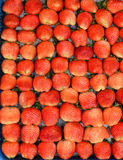 新鲜的成熟红色草莓自然果子背景 免版税图库摄影
