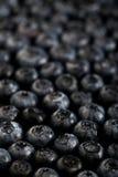 新鲜的成熟蓝莓仿造黑暗的照片宏指令特写镜头 库存图片