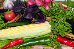 新鲜的成熟蔬菜 库存图片