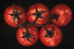新鲜的成熟蕃茄在黑色关闭  库存图片