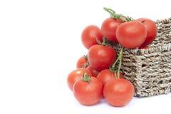 新鲜的成熟蕃茄蔬菜藤 免版税库存图片