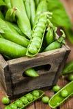 新鲜的成熟绿豆 免版税库存图片