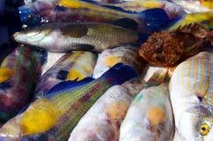 新鲜的抓住在市场上在马赛,法国 库存图片