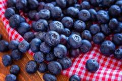新鲜的摘的有机蓝莓 库存图片