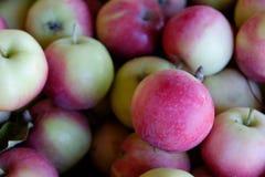 新鲜的摘的樱桃苹果在一个地方有机农厂市场上 库存照片