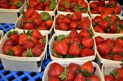 新鲜的摘的草莓在NH的夏天 库存图片