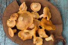 新鲜的整个森林黄蘑菇在圆的木板材a采蘑菇 免版税图库摄影