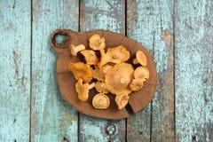 新鲜的整个黄蘑菇在老turqoiu的木板材采蘑菇 免版税库存图片