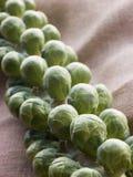 新鲜的新芽茎 免版税库存图片
