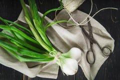 新鲜的春天葱和老剪刀 库存图片