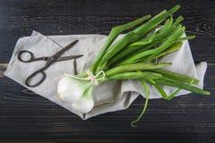 新鲜的春天葱和老剪刀 免版税库存图片