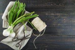 新鲜的春天葱和老剪刀 图库摄影