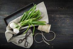 新鲜的春天葱和老剪刀 免版税库存照片