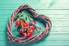 新鲜的春天郁金香开花和在绿色的装饰心脏 免版税图库摄影