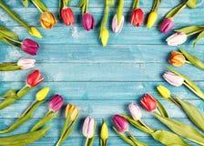 新鲜的春天郁金香艺术性的心形的框架  免版税库存照片