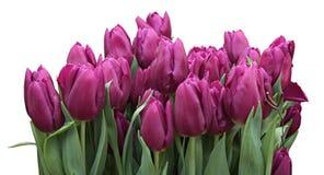 新鲜的春天郁金香花花束  免版税图库摄影