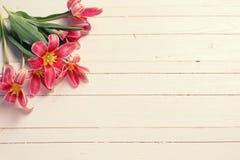 新鲜的春天黄色红色郁金香 免版税库存图片