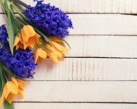 新鲜的春天黄色郁金香和蓝色风信花开花 库存图片