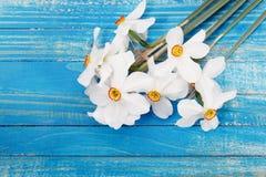 新鲜的春天黄色水仙在蓝色被绘的木板条开花 库存图片