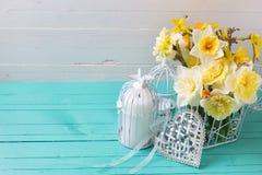 新鲜的春天黄色黄水仙开花,装饰鸟笼和 库存照片