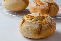 新鲜的有壳的面包小圆面包 库存图片