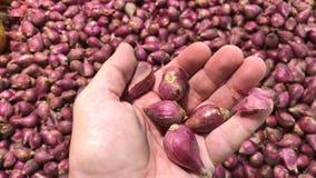 新鲜的有机健康红色大蒜在食物市场上 大蒜菜 关闭4k英尺长度 选择大蒜的人手 股票录像